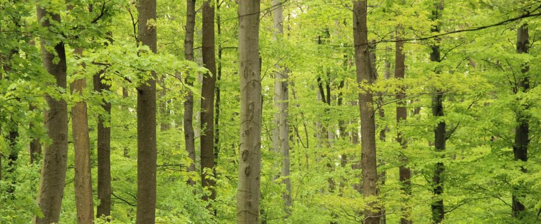 Mehr lesen: Waldpädagogik - go-left Persönlichkeitstraining